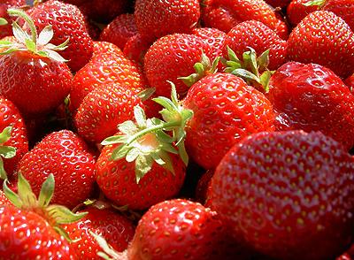 Erdbeeren_WJP_1.jpg