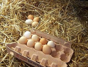 786px_Freerange_eggs.jpg