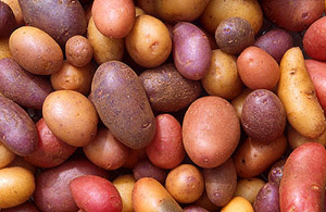 Kartoffel_gross.jpg